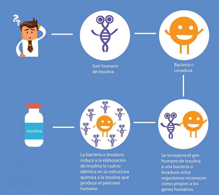 Qué Es La Ingeniería Genética Hechos Una Visión General